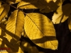 autumn-abiyaneh-92_51