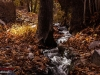 Autumn Natanz 93_071