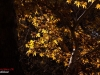 Autumn Natanz 93_074