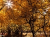 Autumn Natanz 93_117