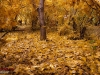 Autumn Natanz 93_130