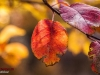 Autumn Natanz 93_141