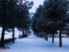 winter-92-arisman_275
